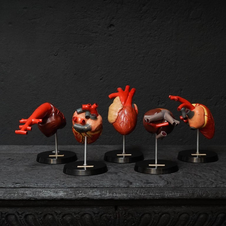 Five German resin hearts on bakelite bases of different animals. Very detailed dog, crocodile, frog, bird and fish hearts.  Made by VEB Sonnenberg SVL for anatomical studies, hand painted, numbered and labeled.  Very decorative curiosity set