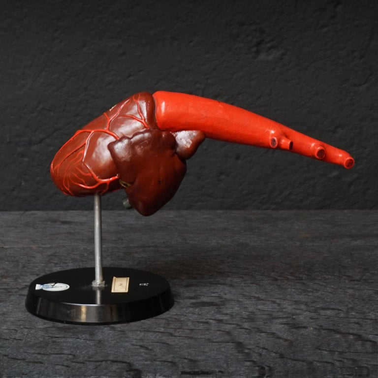 Metal Five 1950s German Anatomical VEB SVL Models of Animal Hearts For Sale