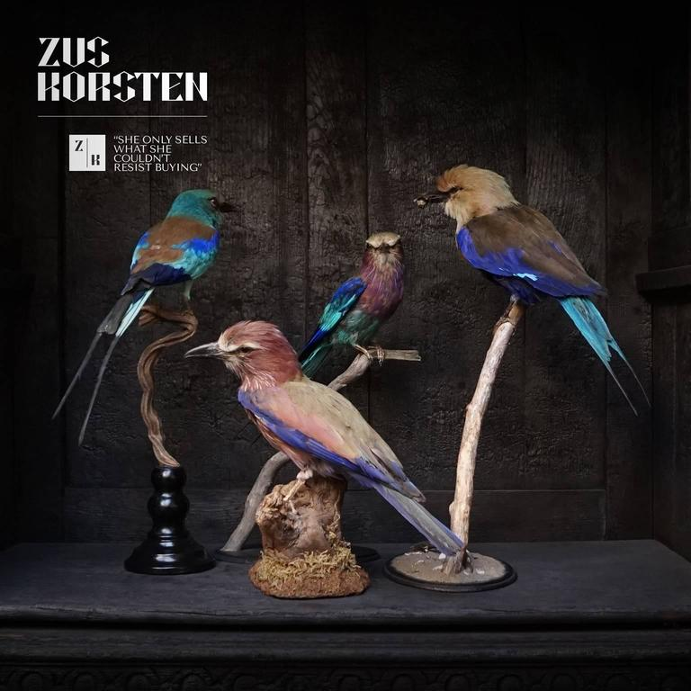 Beautiful set of four Taxidermy rollers  From left to right in the first picture; Lilac breasted roller (on low piece of wood) purple or Rufous crowned roller Blue bellied roller, holding a bumblebee in its beak European roller  Perfect