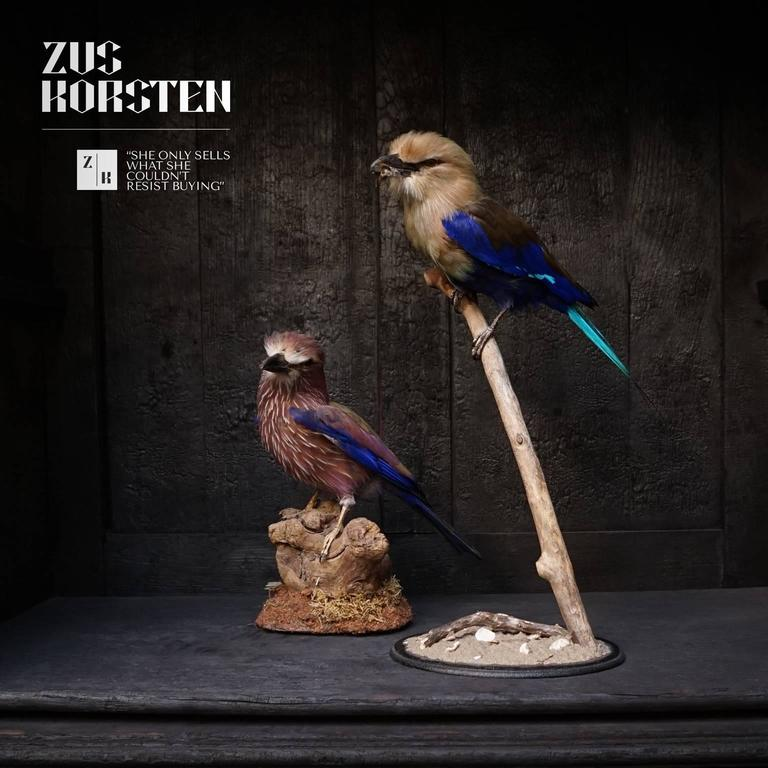 Taxidermy Collection of Rollers Birds In Excellent Condition For Sale In Haarlem, NL