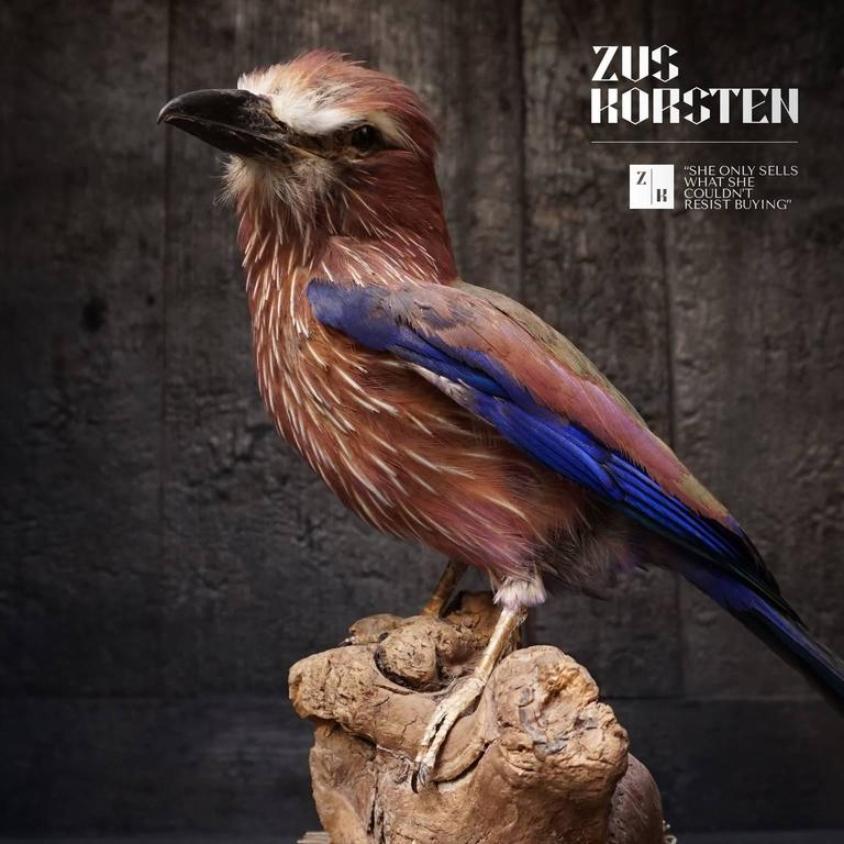 Taxidermy Collection of Rollers Birds For Sale 3