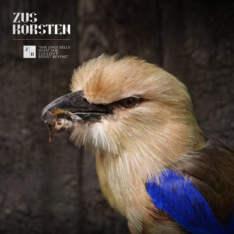 Contemporary Taxidermy Collection of Rollers Birds For Sale