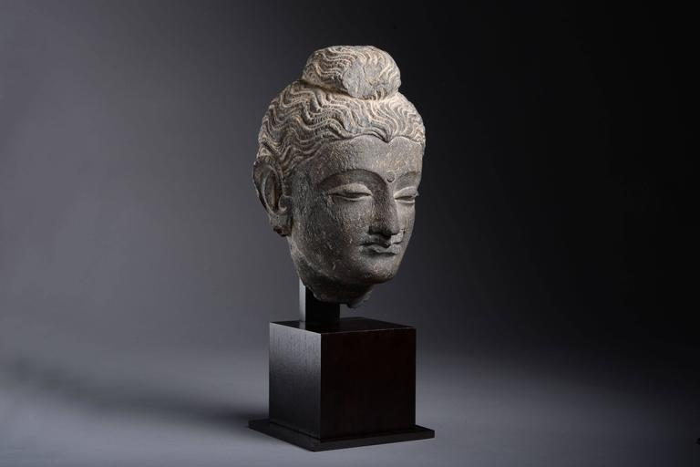 A finely carved and well provenanced stone head of the buddha, from Gandhara, dating to the 3rd century AD.  Gandhara, the land of contrasts, nestled in the snowy peaks and lush valleys of the Hindu Kush, an ancient meeting place between east and