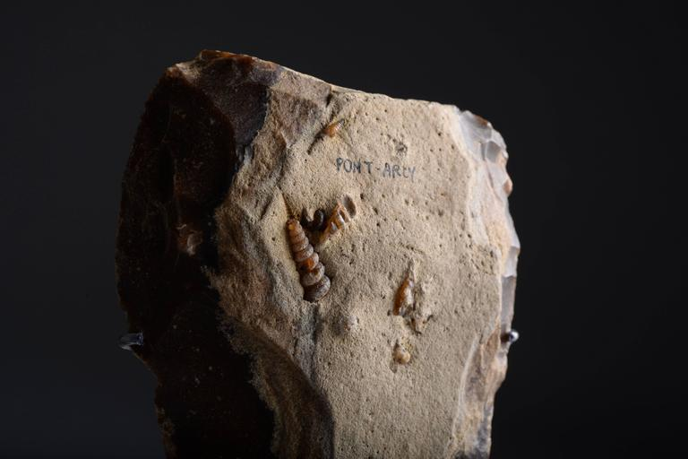 Remarkable Prehistoric Flint Hand Axe with Fossil ...
