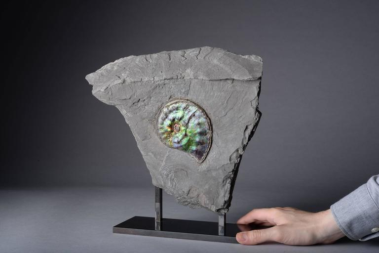 Opalescent Gem Ammonite Fossil In Excellent Condition For Sale In London, GB
