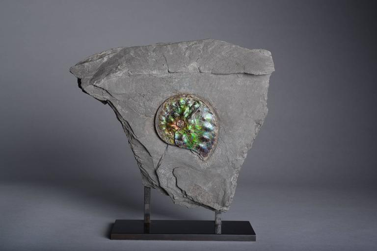 18th Century and Earlier Opalescent Gem Ammonite Fossil For Sale
