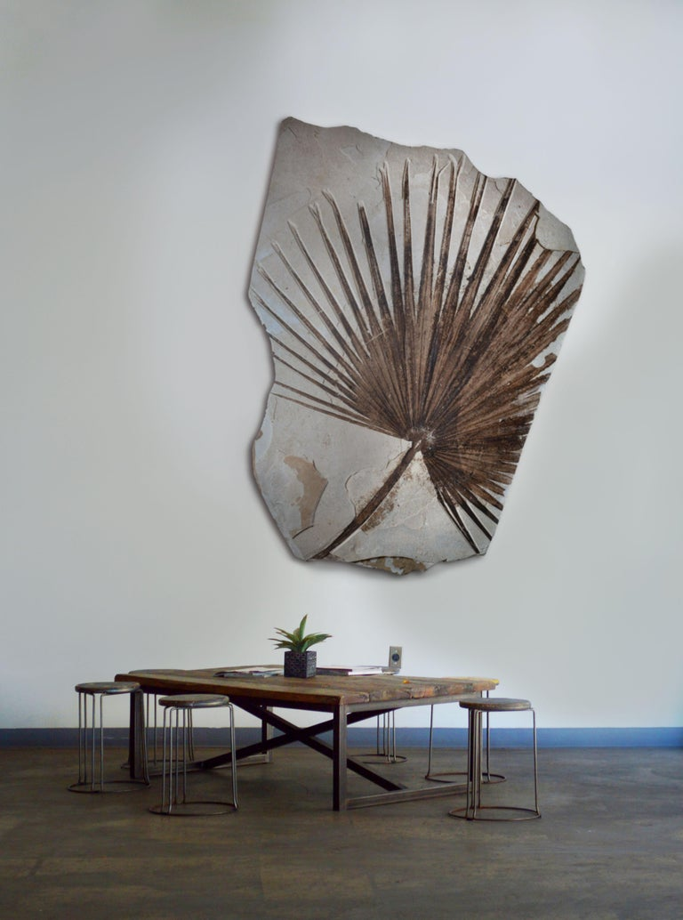 A huge, beautifully preserved fossilized palm frond from the Green River formation, Wyoming. Dating to the Eocene, circa 50 million years before present.  Palm fronds from the Green River formation are among the most sought-after, decorative