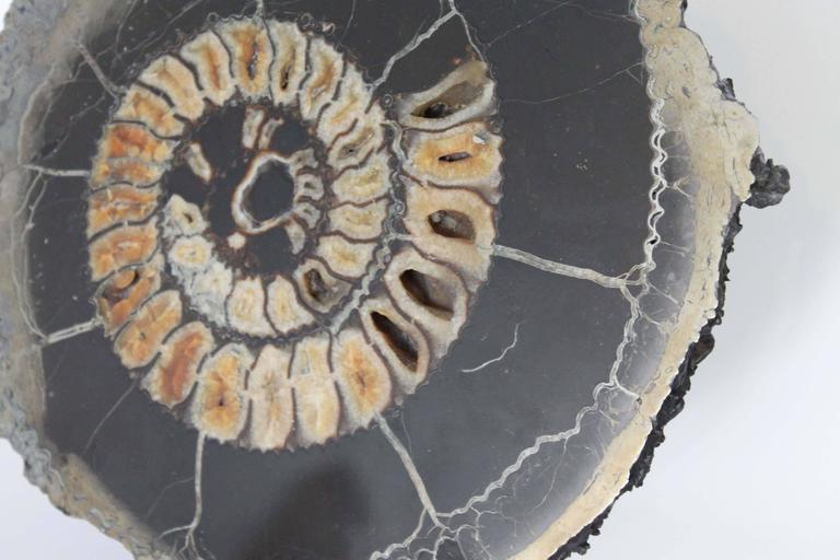 18th Century and Earlier Ammonite Discs, Pair For Sale