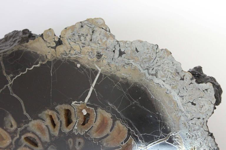 Ammonite Discs, Pair For Sale 2