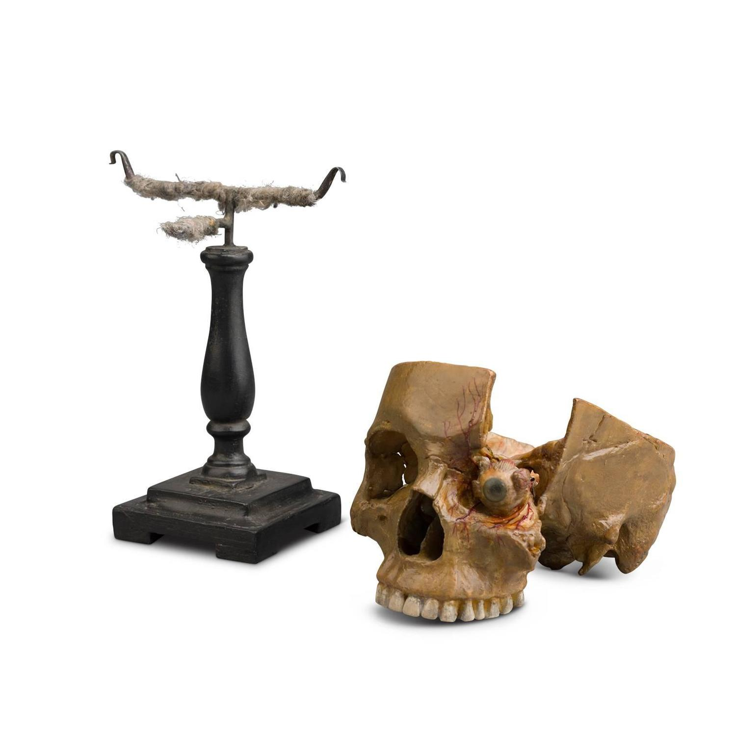 Anatomical Wax Model Of Skull And Eye 1880 1900 For Sale At 1stdibs