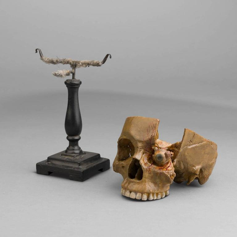 Anatomical Wax Model of Skull and Eye, 1880-1900 For Sale 1
