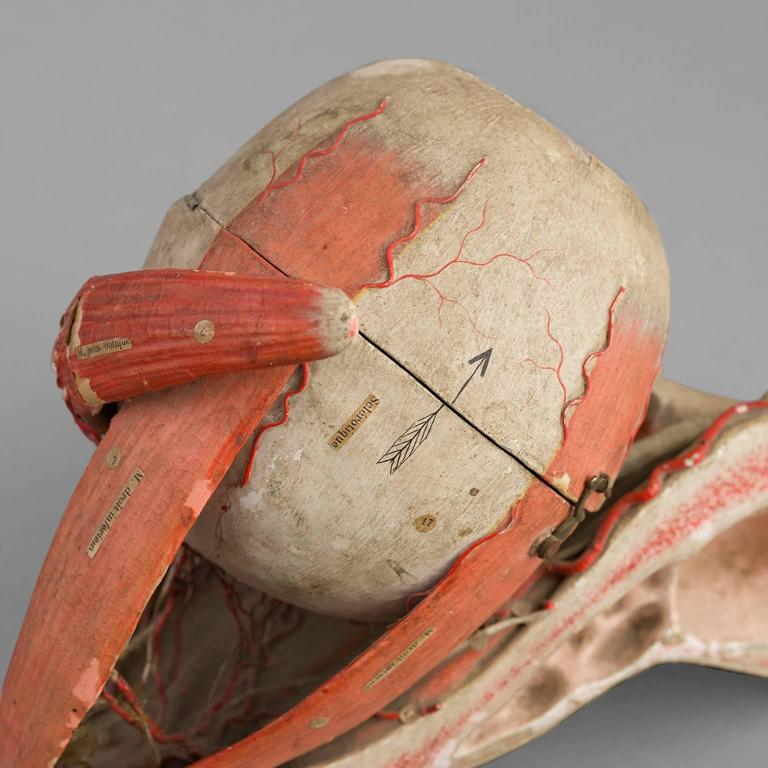 Anatomical Eye Model of Auzoux, circa 1880 For Sale 4