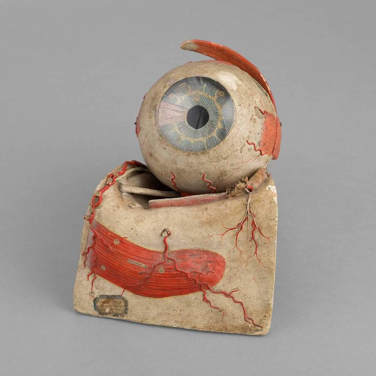 Anatomical Eye Model of Auzoux, circa 1880 For Sale 2
