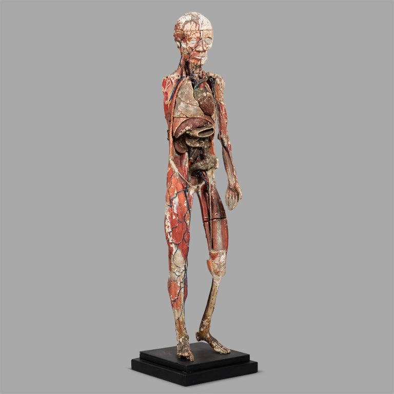 Dr Auzoux Anatomical Model, circa 1880 In Distressed Condition For Sale In Saint-Ouen, FR