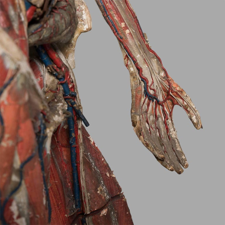 Mid-19th Century Dr Auzoux Anatomical Model, circa 1880 For Sale