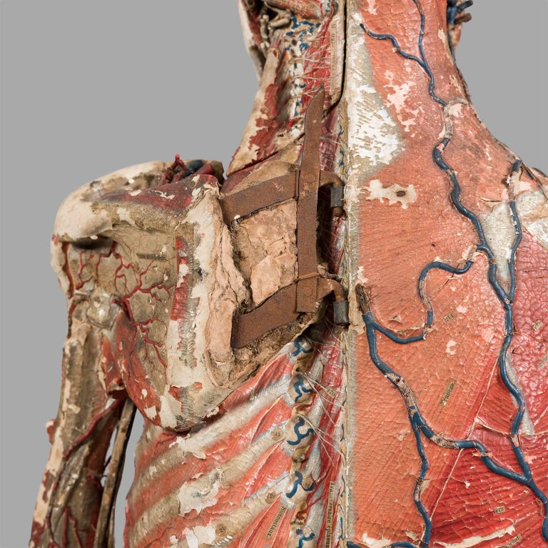 Dr Auzoux Anatomical Model, circa 1880 For Sale 2