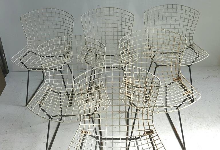 Classic Modernist Wire Bertoia Six Side Chairs Harry Bertoia for Knoll 4