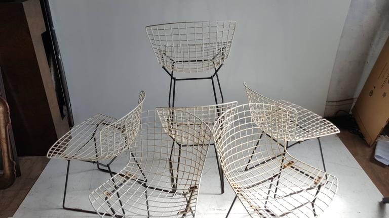 Classic Modernist Wire Bertoia Six Side Chairs Harry Bertoia for Knoll 7