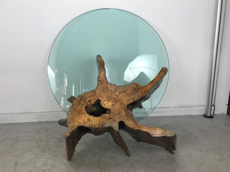 20th Century Unusual Organic Cyprus Root and Glass Coffee Table For Sale