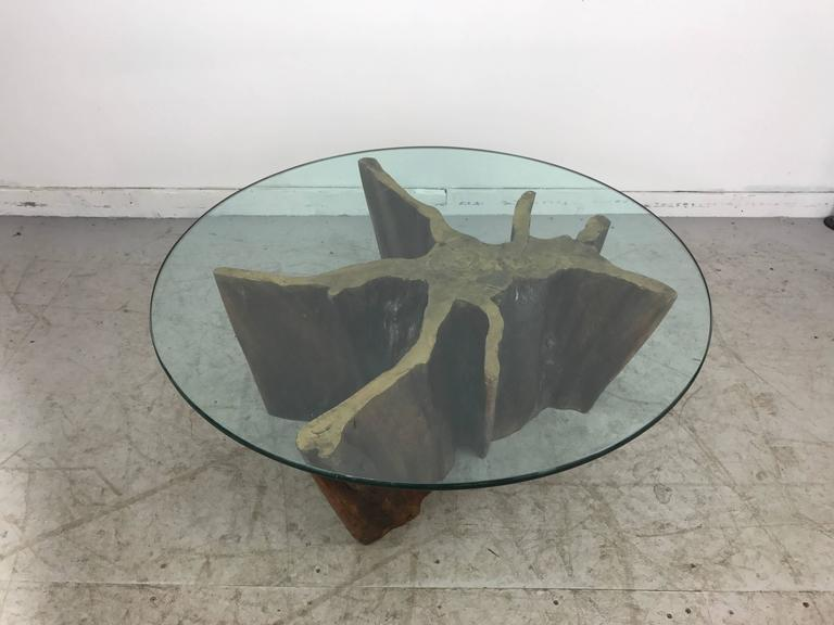 Unusual organic cyprus root and glass coffee table. Retains original old green edge glass top, 4o