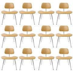 Many Charles Eames DCM Bent Plywood & Steel Chairs for Herman Miller White Ash