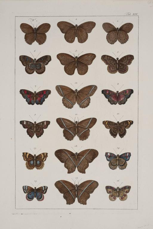Rare pair of original hand-colored prints from Sir Albertus Seba's cabinet of natural curiosities. Prints come from published volumes in Amsterdam between 1734 and 1765. Condition is very good with full margins.