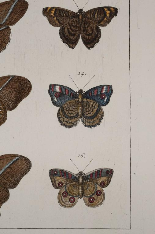 Antique Albertus Seba Pair 18th Century Hand-Colored Engravings Butterflies In Good Condition For Sale In Washington, DC