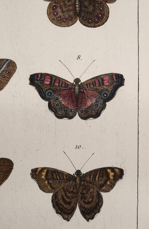 Antique Albertus Seba Pair 18th Century Hand-Colored Engravings Butterflies For Sale 1
