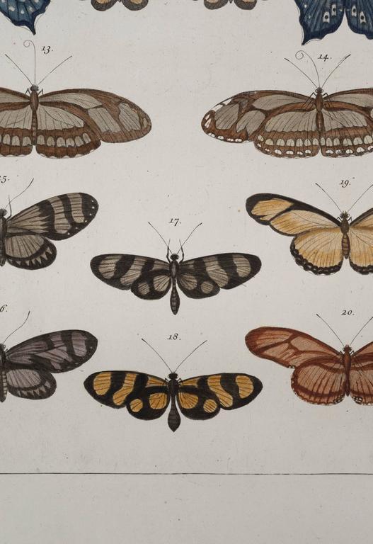 Antique Albertus Seba Pair 18th Century Hand-Colored Engravings Butterflies For Sale 4
