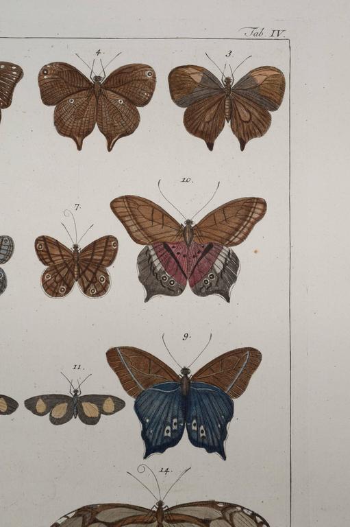 Antique Albertus Seba Pair 18th Century Hand-Colored Engravings Butterflies For Sale 3