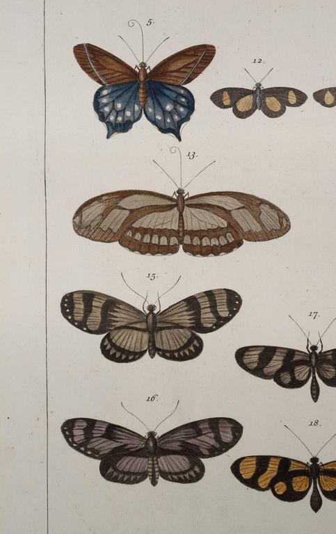Antique Albertus Seba Pair 18th Century Hand-Colored Engravings Butterflies For Sale 2