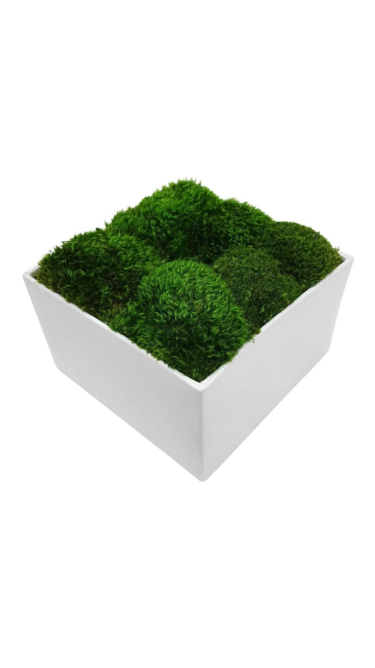 Beautiful botanical in glossy white square planter.