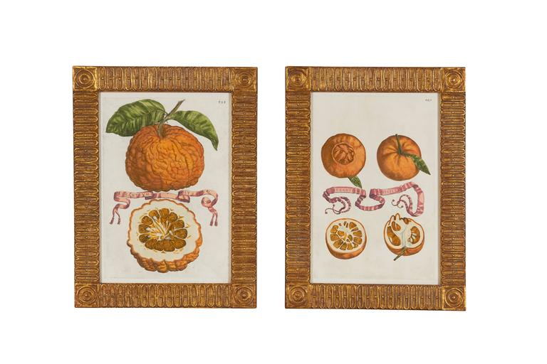 This group of prints comes from Hesperides Sive de Malorum Aureurom Cultura et Usu Libri Quatuor, a treatise on citrus fruits, taxonomy and classification, their origin and locations, methods of cultivation and medicinal uses executed in Rome in
