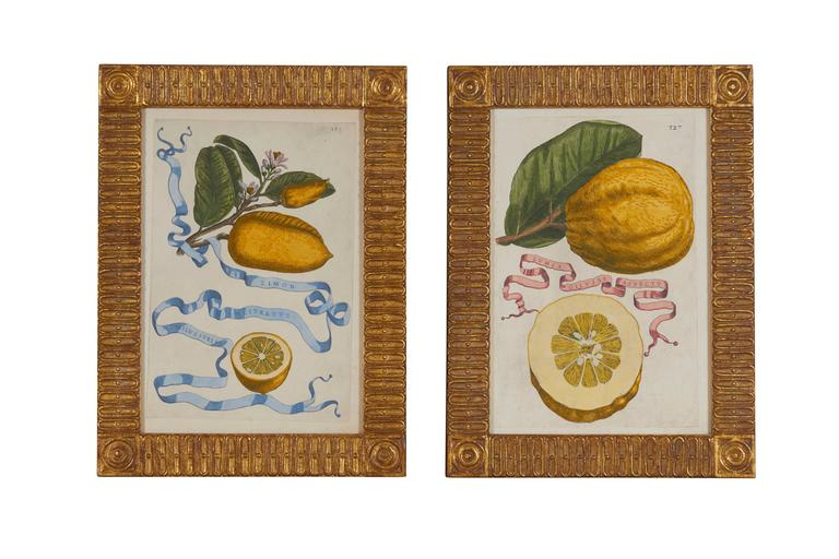 European Set of Eight 17th Century Ribbon-Tied Citrus Hand-Colored Engravings For Sale