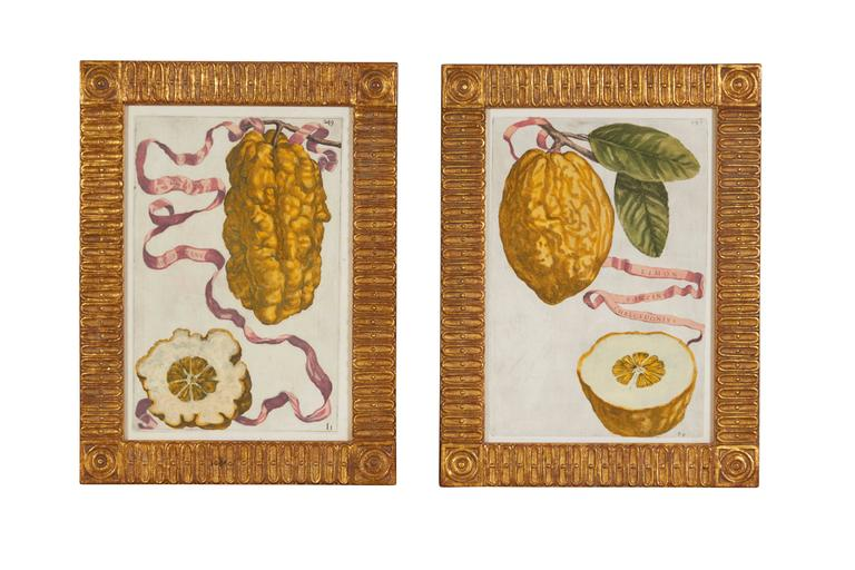 Set of Eight 17th Century Ribbon-Tied Citrus Hand-Colored Engravings In Excellent Condition For Sale In New York, NY