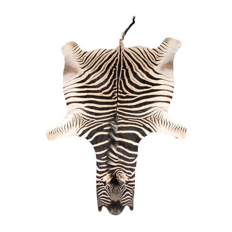 Authentic Zebra Skin Rug 1