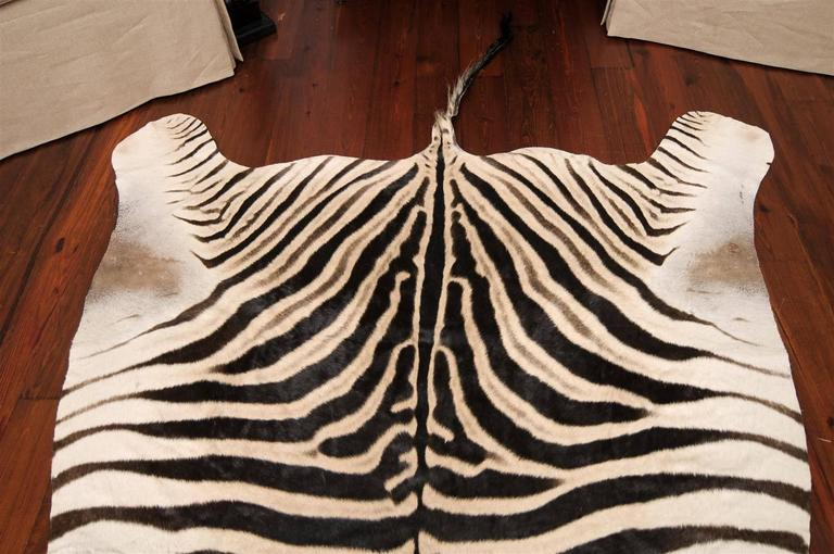 Authentic Zebra Skin Rug 6