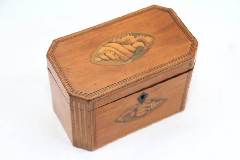 Satinwood Late 18th Century Octagonal Tea Caddy with Conch Shell Inlay For Sale