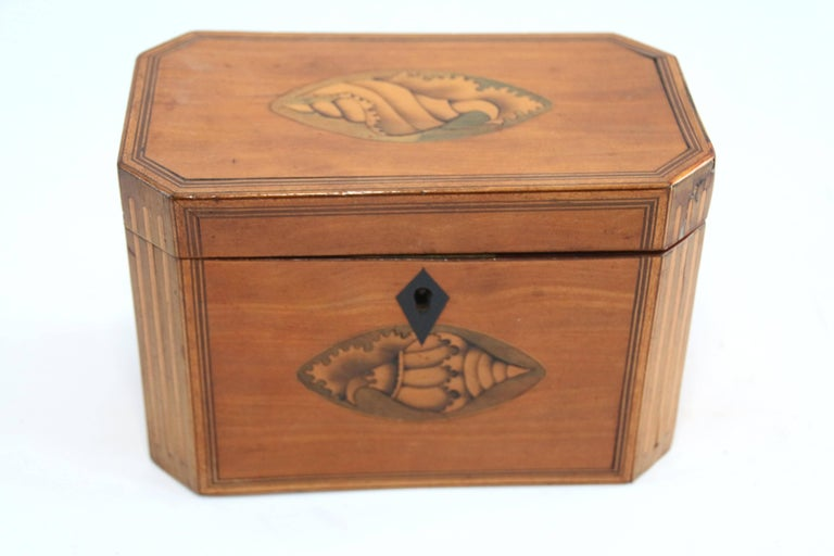 Late 18th Century Octagonal Tea Caddy with Conch Shell Inlay For Sale 1