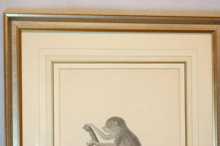 Framed Late 18th/ 19th Century Print