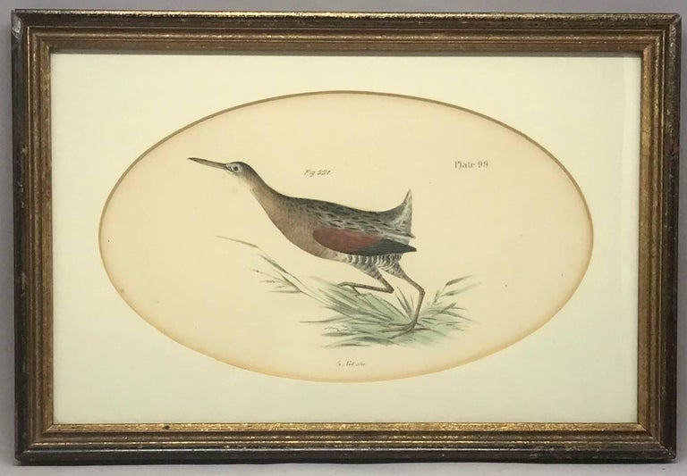 Pair American hand-colored bird lithographs. Pair framed bird lithographs under oval mats by artist J.W. Hill and publisher George Endicott, NY. United States, late 19th century