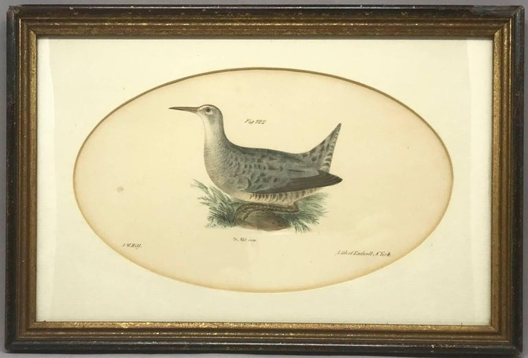 Pair American Hand-Colored Bird Lithographs  In Excellent Condition For Sale In New York, NY
