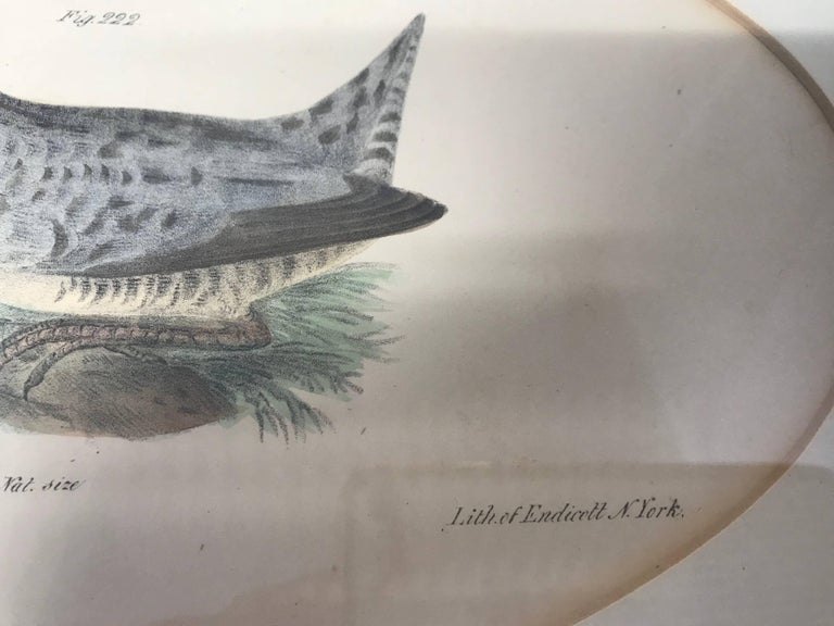 Pair American Hand-Colored Bird Lithographs  For Sale 2