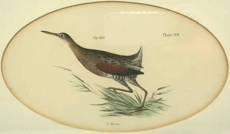 19th Century Pair American Hand-Colored Bird Lithographs  For Sale