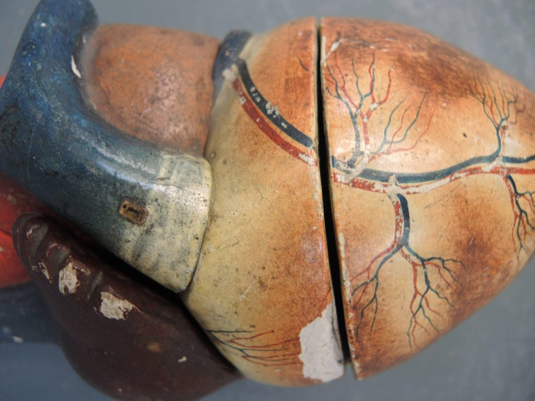 Industrial Papier Mache Anatomical Model of the Human Heart by Dr. Auzoux, circa 1880 For Sale