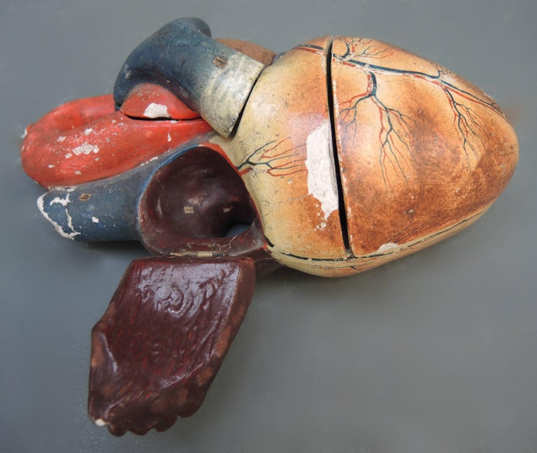 Papier Mache Anatomical Model of the Human Heart by Dr. Auzoux, circa 1880 In Fair Condition For Sale In Antwerp, BE