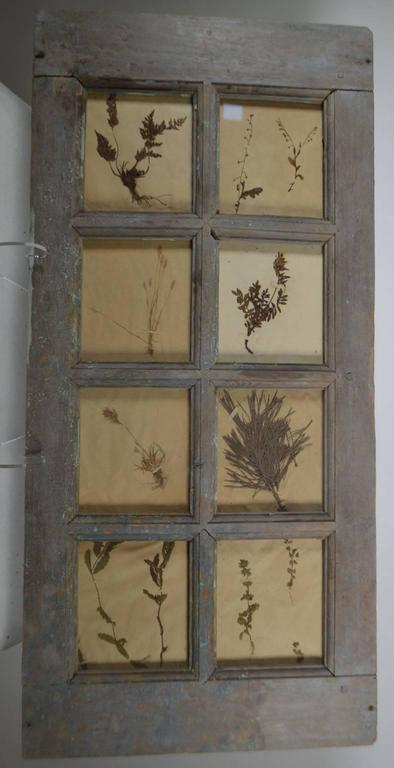 Late 19th Century Herbiers framed in multi paned French window. 25 in various sizes available.