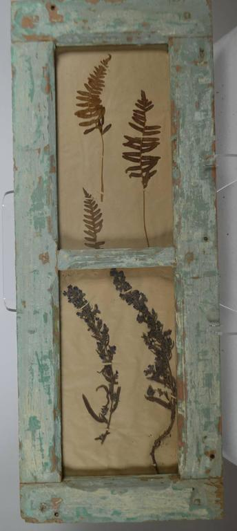 Herbiers framed in antique window frames. Age is approximate when the Botanicals were collected.