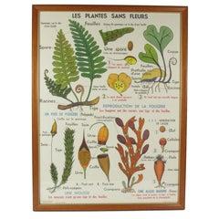 Vintage French Botanical Poster Les Plantes Sans Fluers