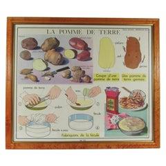 Vintage French La Pomme De Terre Classroom Poster